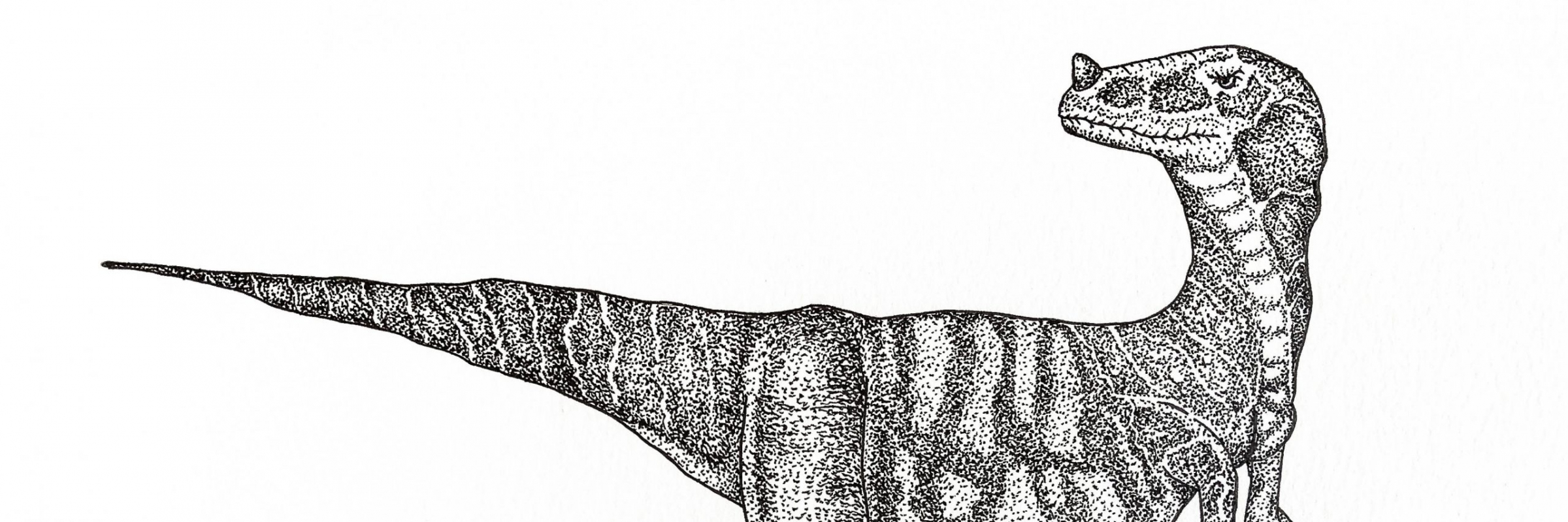 Dino Crop (1 of 1)